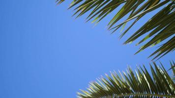 grüne Palmblätter flattern im Wind gegen einen blauen Himmel video