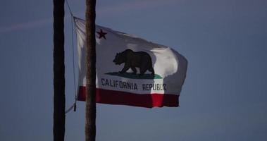 vlag van Californië beweegt in een winderige dag met seaguuls op achtergrond in 4k