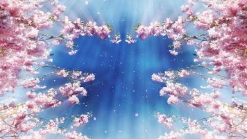 fondo de cerezo en flor en bucle