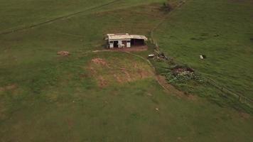 drone voa sobre um cavalo em 4k