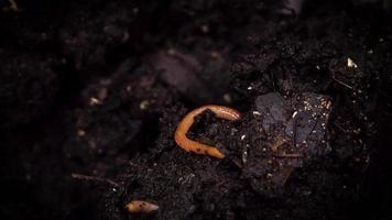 lombrices de tierra y pequeños insectos video