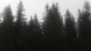 abetos a través de una ventana en un día lluvioso