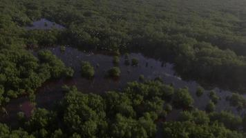 Aerial of birds flying over mangroves