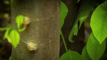 folhas e tronco no jardim