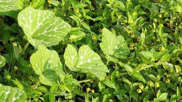hojas verdes y flores amarillas con la luz del sol