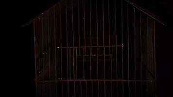 lâmpada balançando revela uma gaiola assustadora