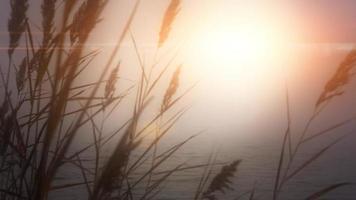 pôr do sol lago grama amanhecer sol água