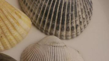 Rotating stock footage shot of sea shells - SEA SHELLS 002