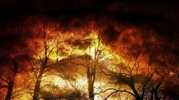 humo brillante dramático en el bosque