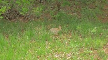 Bunny In A Meadow At The Foot Of The Rocky Mountains 4k