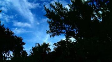árboles y nubes a contraluz