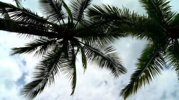 Zoom in on beautiful palm trees with white clouds video