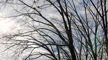 arboles de invierno
