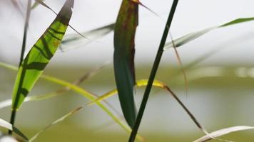 Cerca de largas hojas verdes moviéndose lentamente con ramas en primer plano en 4k