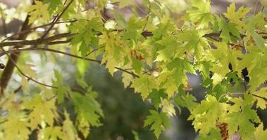 Green and yellow leaves creating a beautiful natural texture moved by the wind in 4K