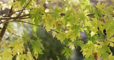 folhas verdes e amarelas criando uma bela textura natural movida pelo vento em 4k video