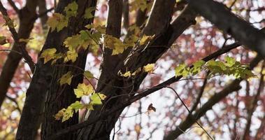 foto estática de uma grande árvore com poucas folhas verdes e amarelas em 4k