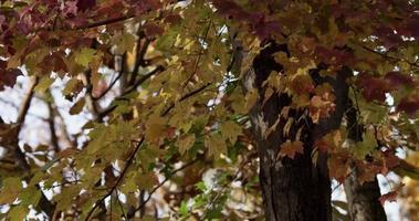 texturerad bakgrund med tusentals naturliga löv som rör sig långsamt i 4k