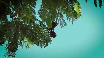 ramas de árboles verdes y cielo azul