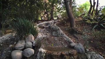 pequeño arroyo en el zoológico