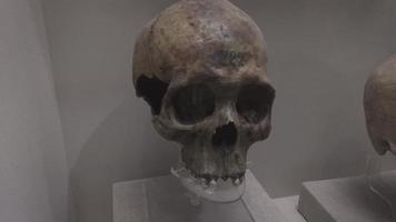 espécime médico de crânio antigo
