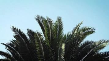 folhas de palmeira em parque público video