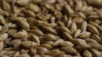 dose rotativa de cevada e outros ingredientes de fabricação de cerveja - fabricação de cerveja 123