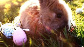 conejito de pascua blanco con huevos de pascua sentado en la hierba video
