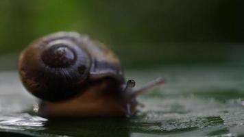 close up de um caracol movendo-se lentamente através de um galho video