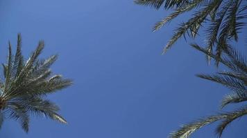 palmeras - palmeras perfectas contra un hermoso cielo azul