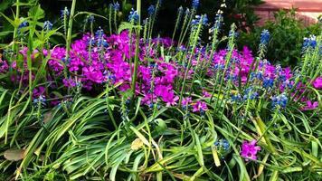 Kamera bewegt sich von Blumen in 4k