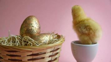 Pollito amarillo en huevera con nido de pascua y huevos de pascua