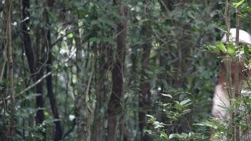 mulheres caminhando relaxam na floresta.