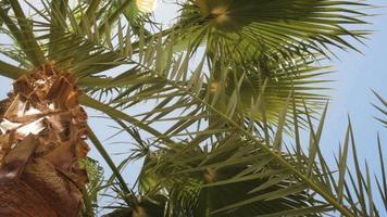 palmiers contre un beau ciel bleu video