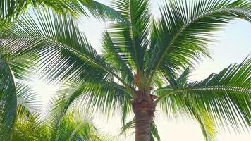 Palmenblätter bewegen sich