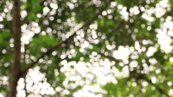árbol borroso con luz solar