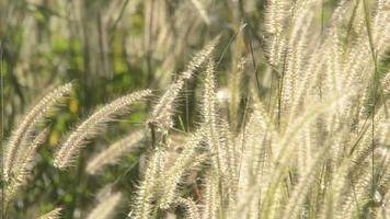 flor de hierba en movimiento video