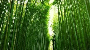 floresta de bambu em arashiyama, japão