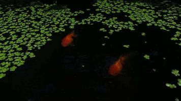 A group of goldfish in the basin at home. low light