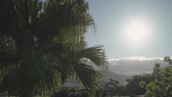 rayos de sol atrapado a través de una palmera video