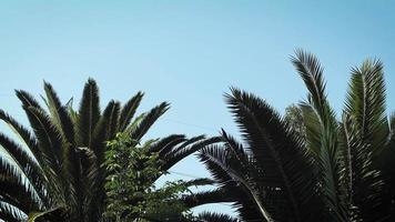 palmeras en el parque público