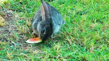 doce coelho comendo