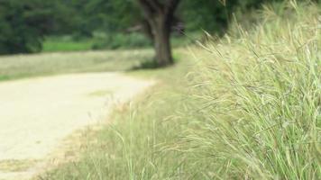 pradaria de tallgrass isolada por uma estrada de terra