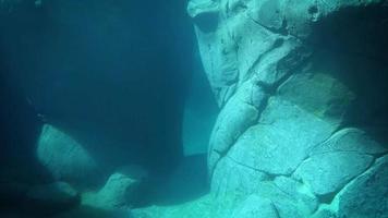 leão-marinho nadando em habitat aquático