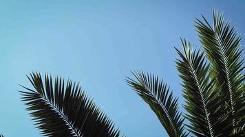 close up de folhas de palmeira em parque público video