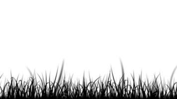 folhas de grama preto e branco isolado silhueta loop