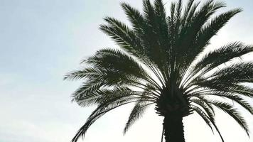 Palm Tree And The Sky