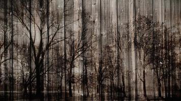 fundo escuro místico de madeira video