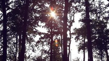Sonnenstrahlen bahnen sich ihren Weg durch die Bäume