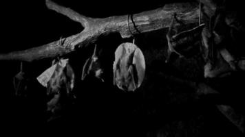 visão noturna de morcegos dormindo à noite 4k
